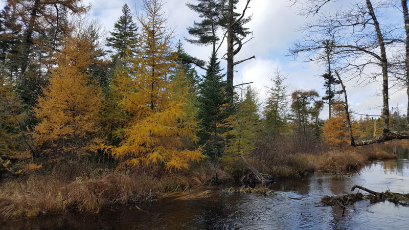 A river with trees in fall colours